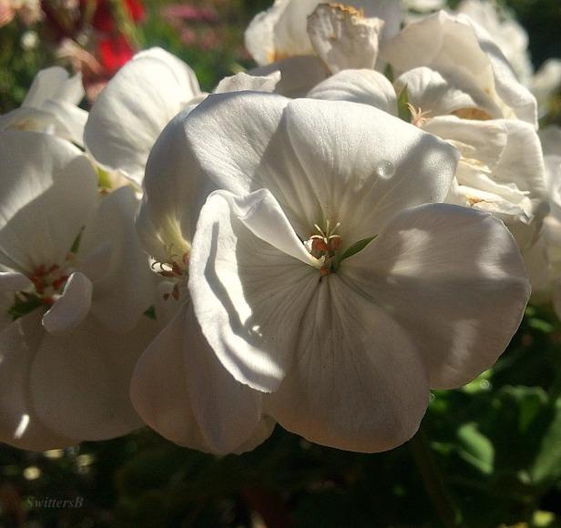 flowers-garden-SwittersB-photography