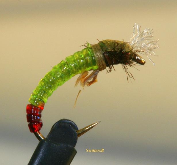 green pupa-macro photography-fly pattern-SwittersB