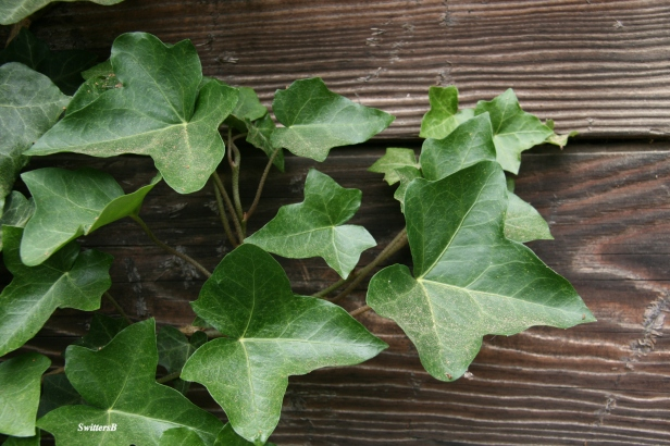 Ivy-Boards-Rustic-Photography-SwittersB