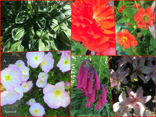 Mollys Garden-gardening-photography-SwittersB
