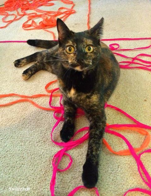 Ninnie-Cats-Pets-Yarn-Photography-SwittersB