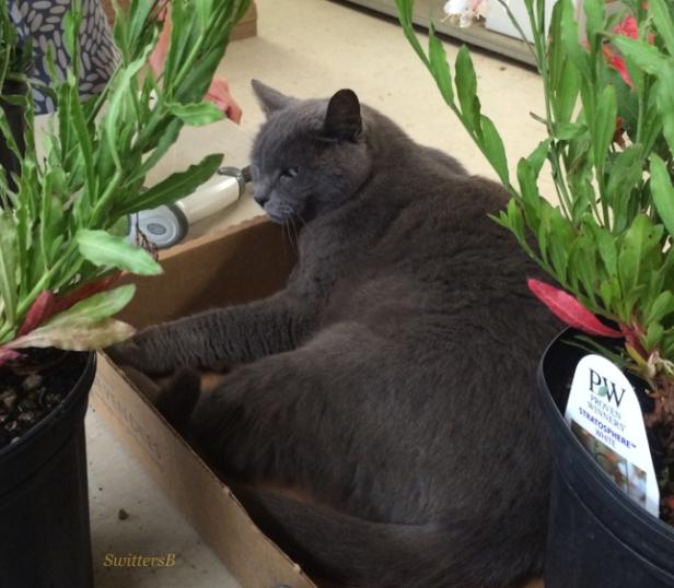photography-cats-humor-SwittersB