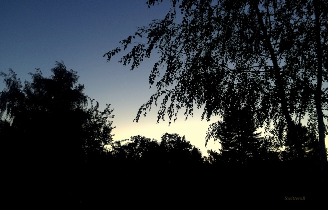 photography-dusk-trees-backlit-SwittersB