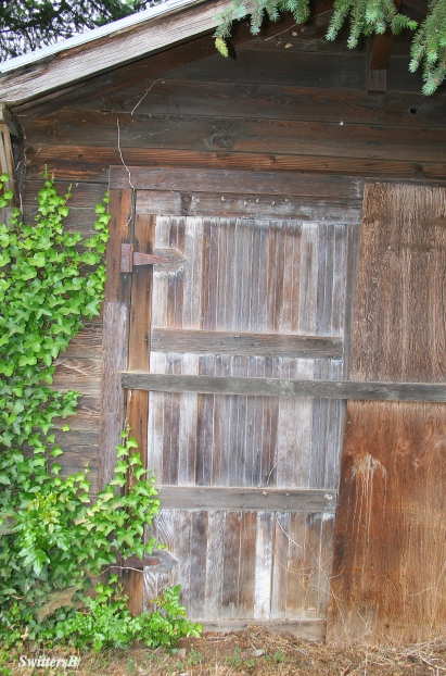 photography-old shed door-SwittersB-Ivy