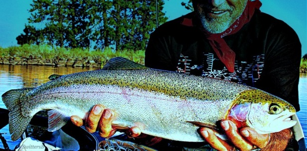 Rainbow Trout-SwittersB-Photography-Outdoors-Fly Fishing