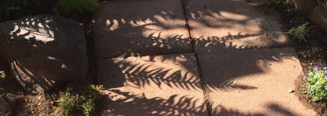 shadows-ferns-garden-photography-walkway-SwittersB