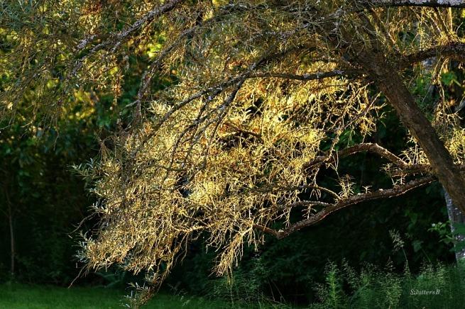 Sunshine-Tree-Glow-Nature-Photography-SwittersB