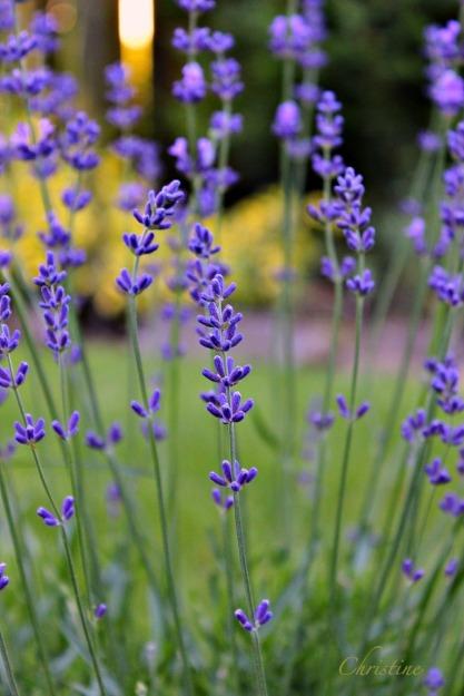 wildflowers-Christine Kelly-photography-SwittersB-nature