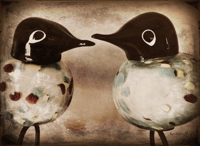 birds talking-photography-SwittersB