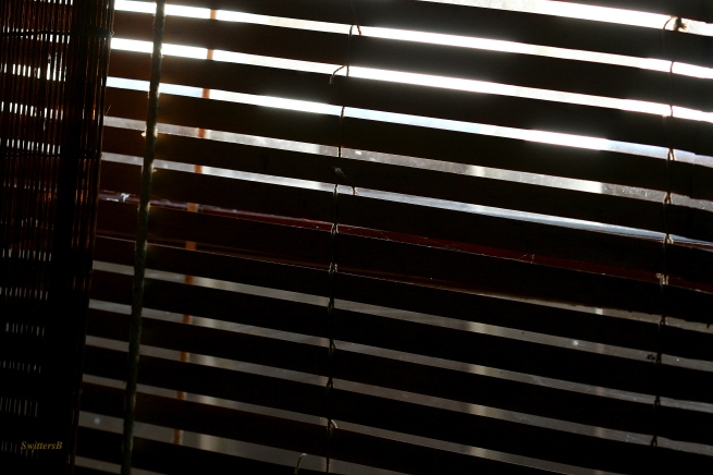 Blinds-Photography-SwittersB