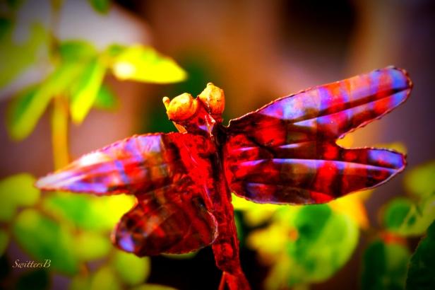 Dragon fly-Garden-Yard Art-Photography-SwittersB