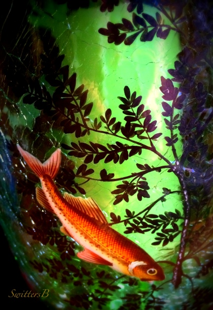 fish-glass vase-art-photography-SwittersB