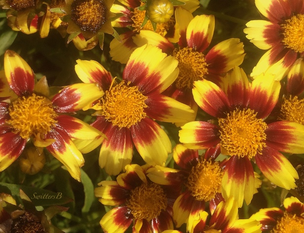 flowers-fresh paint-photography-garden-SwittersB