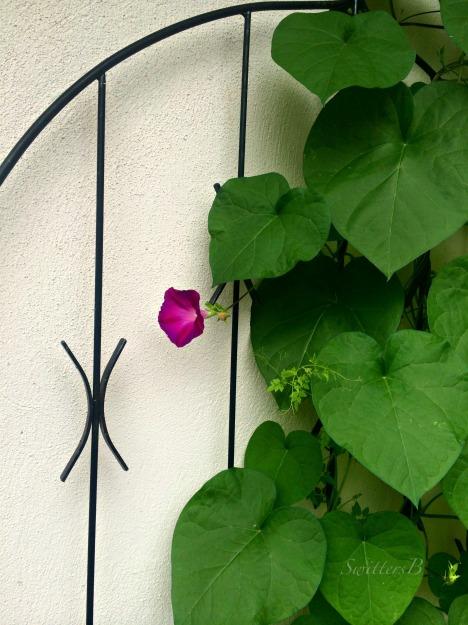 gate-flower-SwittersB-Photography-Edgefield