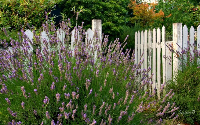 lavender-garden-gate-photography-SwittersB
