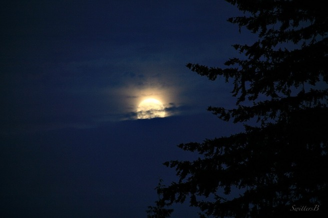 Moonrise-Moon-Fir Tree-Photography-SwittersB