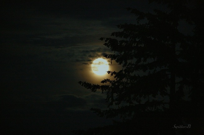 moonrise-Moon-Tree-clouds-photography-SwittersB