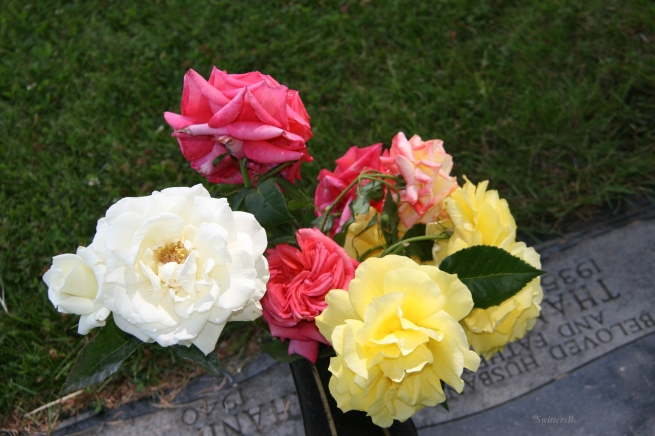 roses-flowers-cemetery-photography-SwittersB