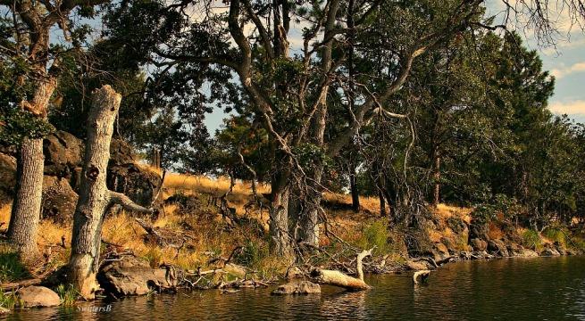 shoreline-oak trees-lake-photography-nature-SwittersB