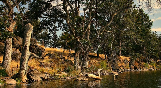 shoreline-oak trees-lake-photography-nature-SwittersB