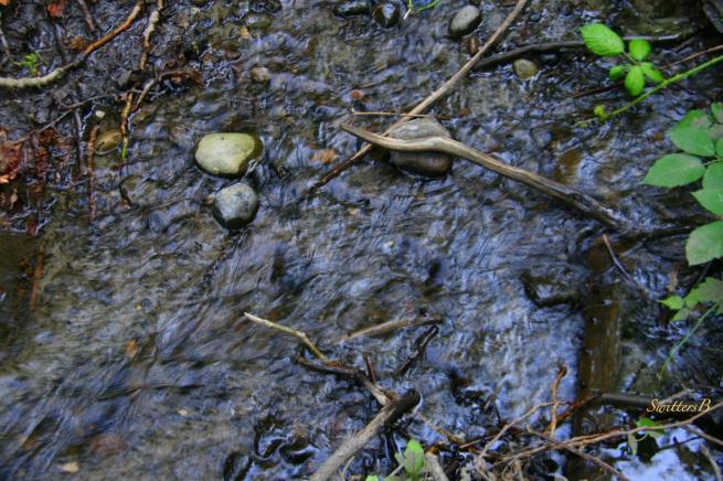 Spring-watermark-photography-nature-water-SwittersB