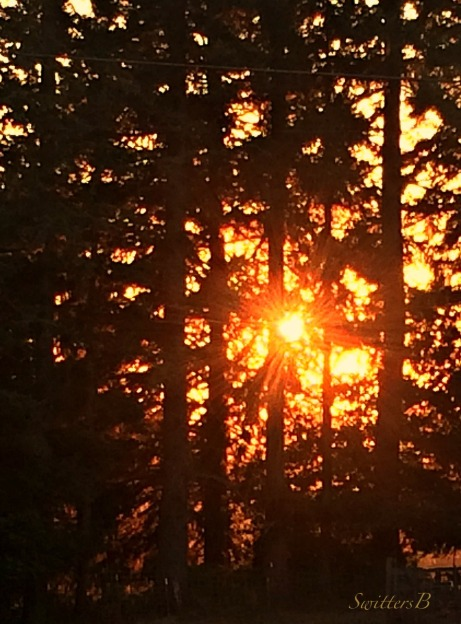 sunset-sunscreen-forest-Oregon-photography-SwittersB