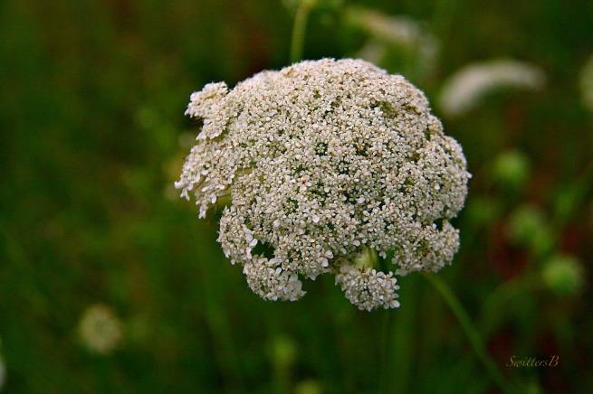 Weed-flowers-macro-photography-SwittersB