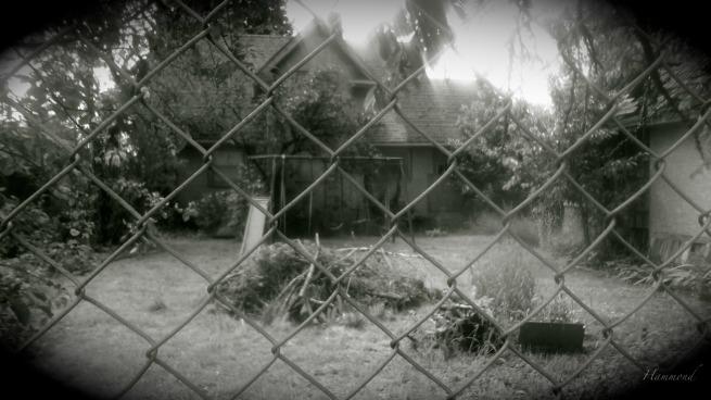 a backyard-memories-Hammond-photography-SwittersB