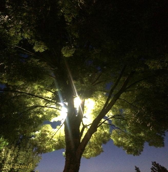 backlit-night-tree-Summer-photography-SwittersB