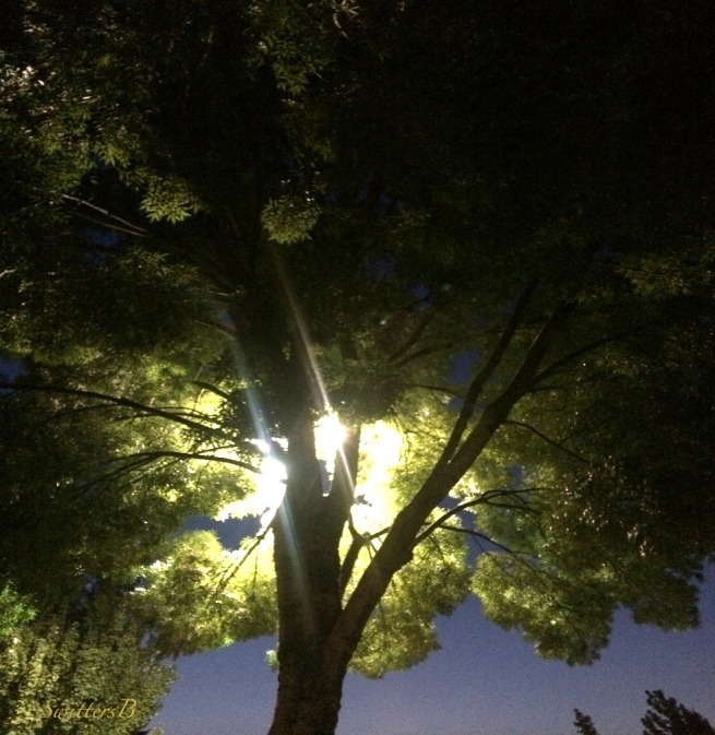 backlit-night-tree-Summer-photography-SwittersB