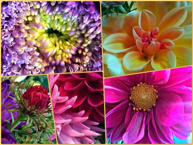 bouguet-cut flowers-bevy of beauties-photography-SwittersB-macro