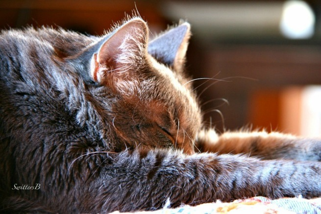 cat nap-pets-Tabby-Penny the Cat-photography-Switters