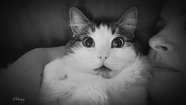 Cat-Piper-Big Eyes-Jaimee-TMuncy-photography