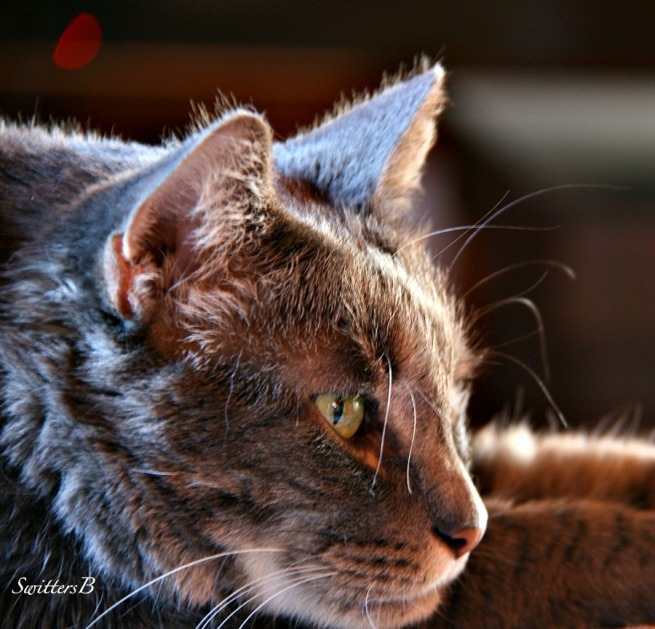 cats-tabby-Penny the Cat-Photography-pets-Switters