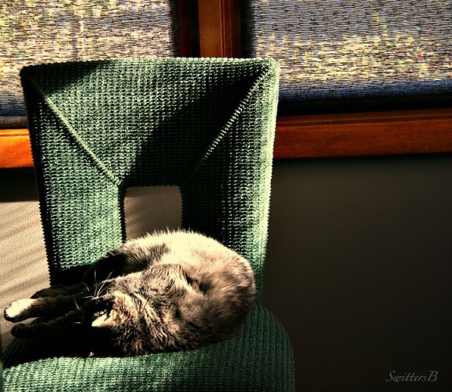 Cats-Tabby-Penny the Cat-sunlight streaming-chair-sleep-photography-SwittersB