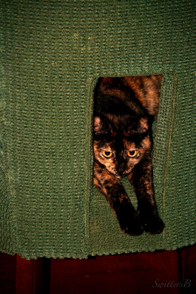 Cats-Tortoiseshell Calico-Photography-Ninnie the Cat-SwittersB
