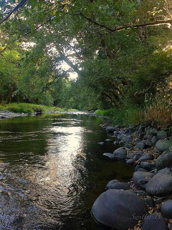 downstream--oregon-evening-photography-SwittersB