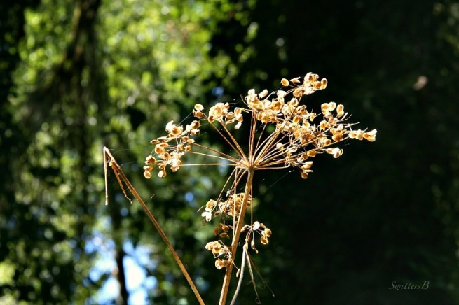 dry flower-spent-photography-SwittesB