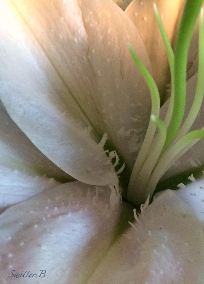 flower-macro-swittersb-photography