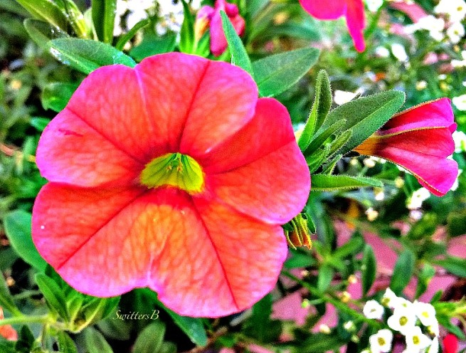 flower-red-marco-bloom-garden-SwittersB-photography