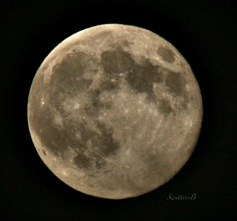 full moon-August 10 14-photography-smokey-SwittesB