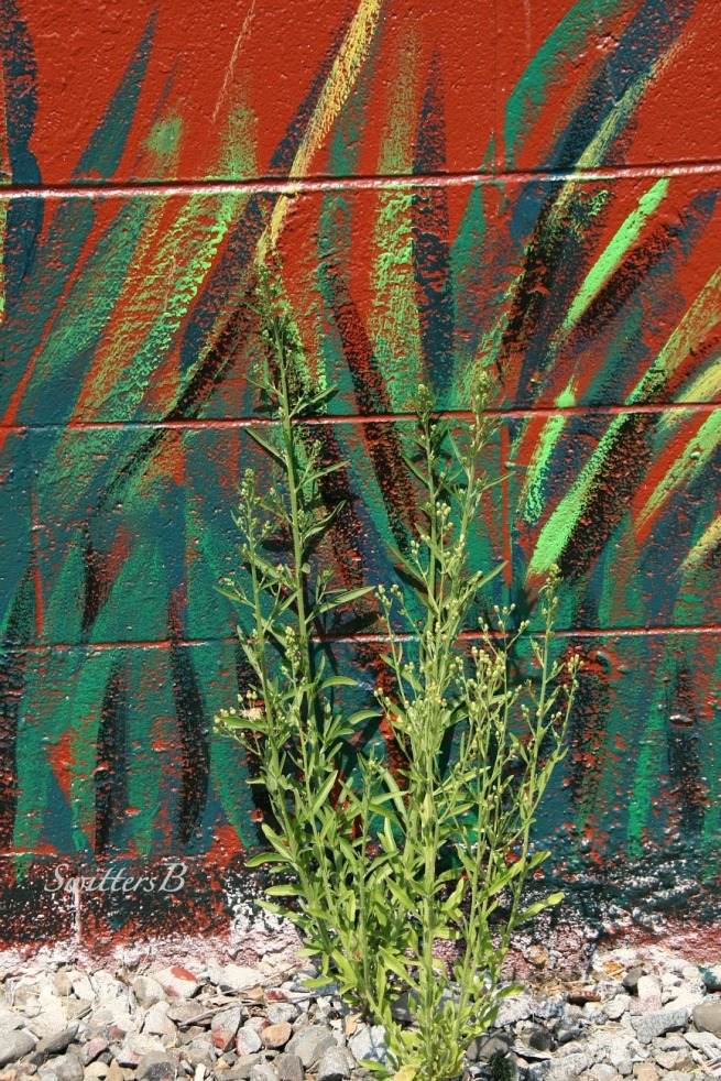 Imitation-Painting-Weed-Photography-SwittersB