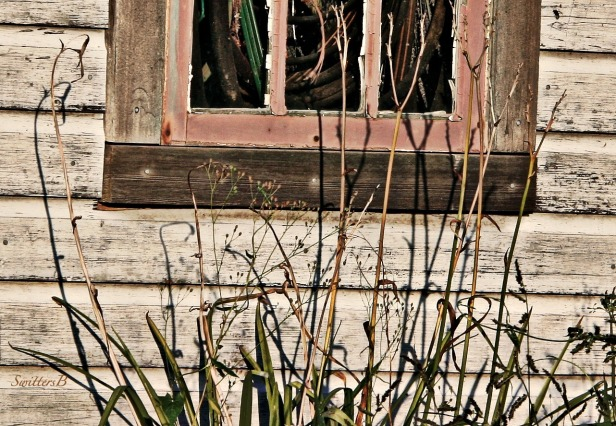 old shed-weeds-shadows-rustic-photography-SwittersB