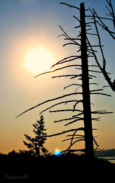 photography-ragged-silhouette-nature-SwittersB-bare tree