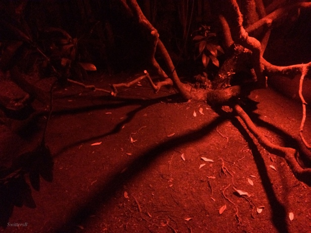 red light-yard-rhody-photography-SwittersB