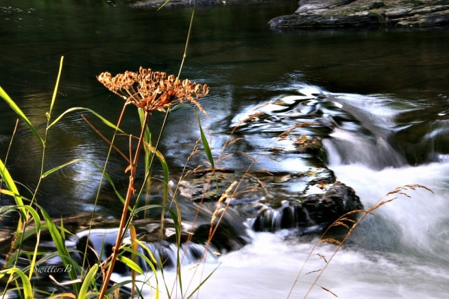 river-rapids-photography-oregon-streamside-swittersb