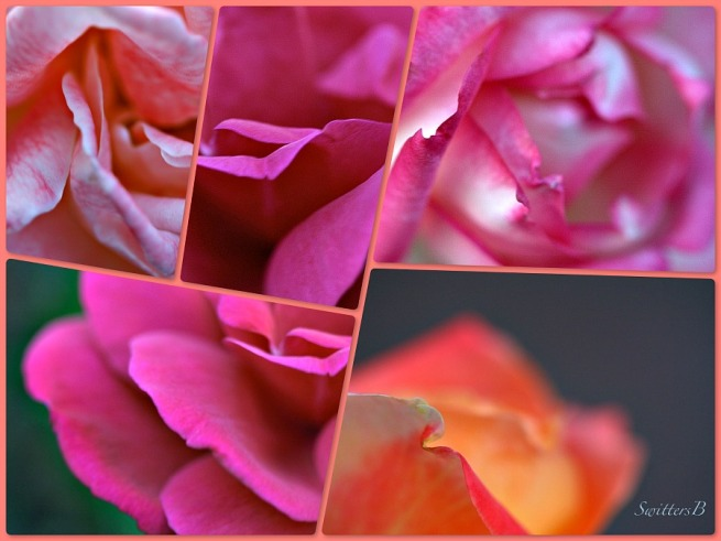 rose petals-swittersb-macro-photography-roses-petals