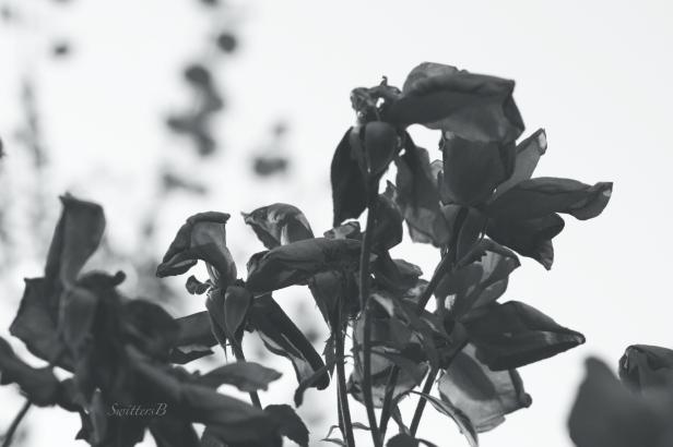 roses-dark-evil-photography-SwittersB