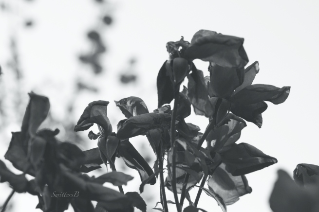 roses-dark-evil-photography-SwittersB