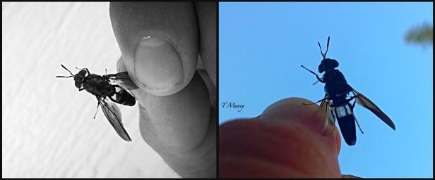 Tony Muncy-Insect-Macro-Photography-SwittersB